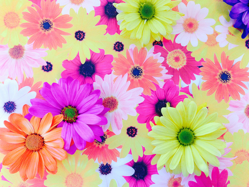 Wordless Wednesday- Does this image have real flowers?
