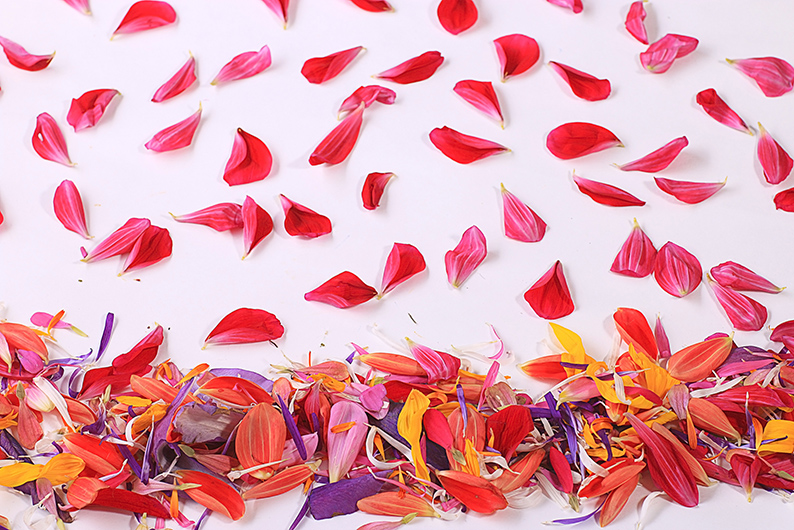 Have fun this summer with outdoor parties. Get your kids help by making fresh flower confetti.