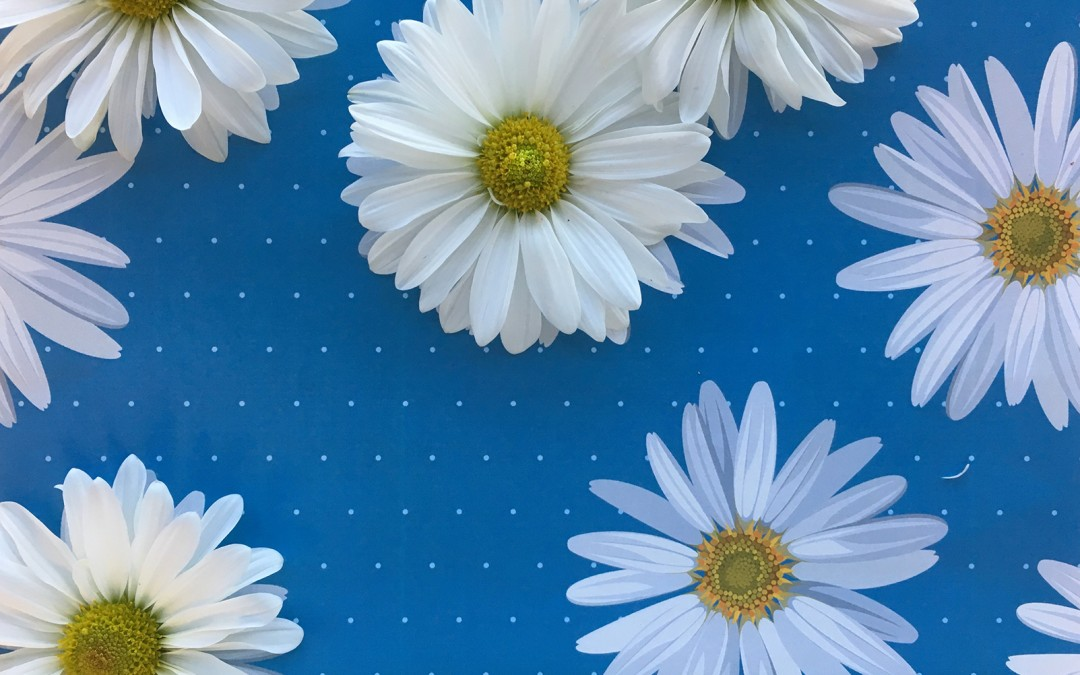 How many fresh Daisies do you see?