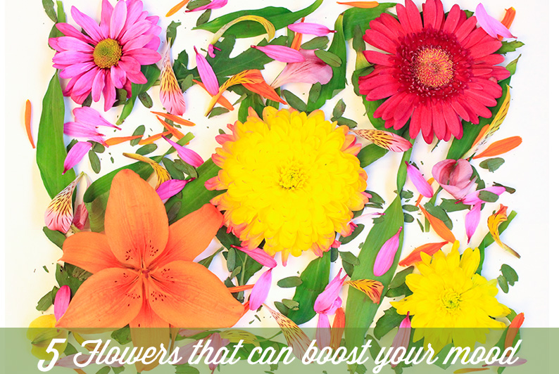 5 Fresh Flowers That Can Boost Your Mood