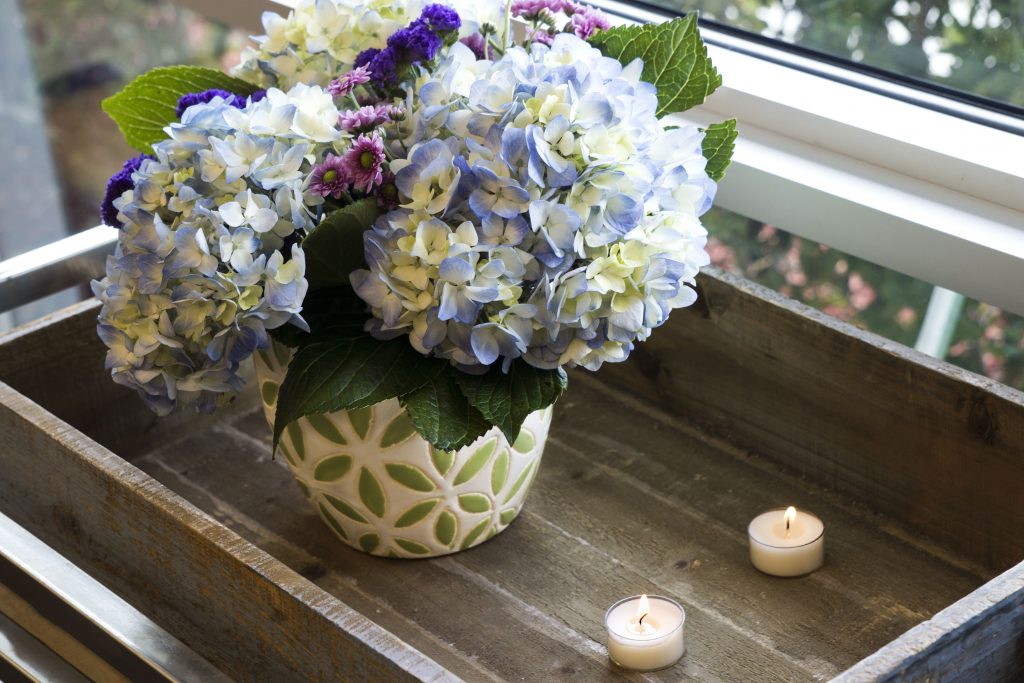 How to Care for Hydrangea Flowers