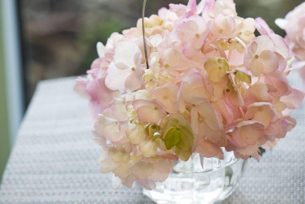 Care Tips for Long Lasting Fresh Cut Lone Star Living Hydrangeas